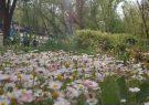 عکسهای بهاری از پارک جنگلی شهرستان قوچان