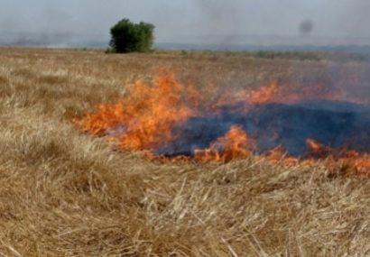 مدیر جهاد کشاورزی جوین: سوزاندن کاه و کلش در مزارع کشاورزی غیر علمی و غیرقانونیست