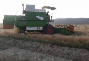 برداشت جو از مزارع شهرستان جوین آغاز شد/ پیش بینی افزایش تولید ۱۰ درصدی