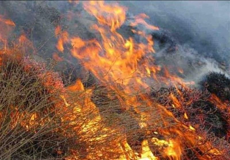 وقوع بیش از ۲۴۰ مورد حریق در مراتع و پارکهای طبیعی شاندیز