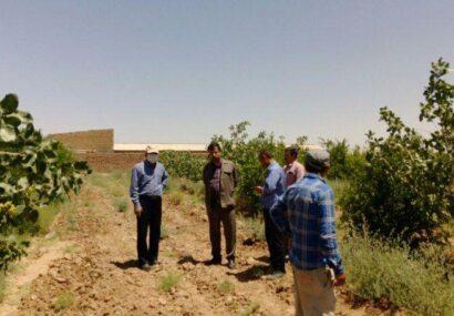 مدیر جهاد کشاورزی رشتخوار: در قانون اصطلاحی تحت عنوان زمین خواری وجود ندارد