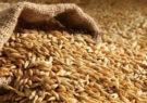 توزیع ۲۴۱۳ تن بذر اصلاح شدهی گندم و جو بین کشاورزان شهرستان مشهد