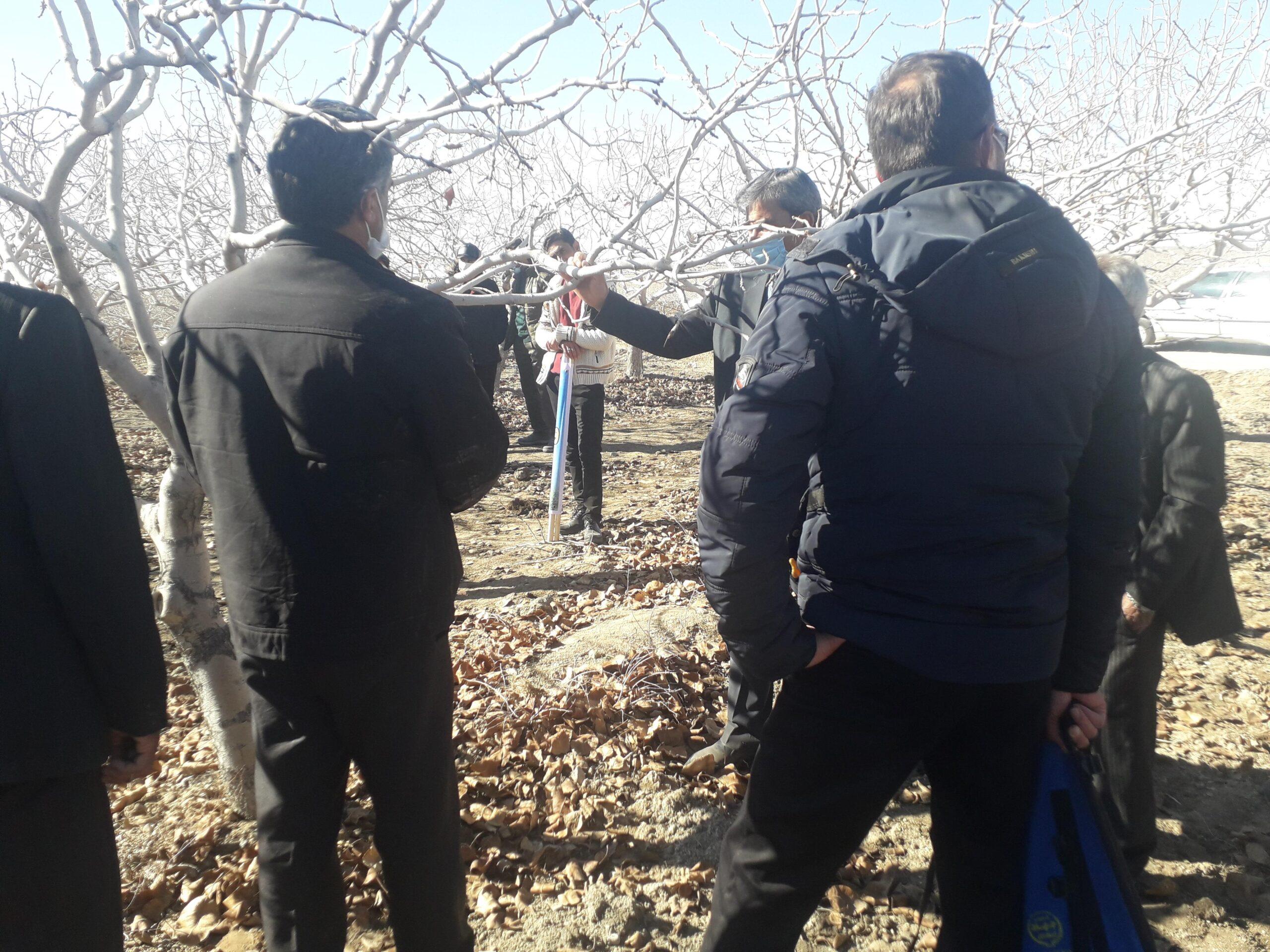 برگزاری کارگاه آموزشی هرس و تغذیه درختان پسته در تربت حیدریه