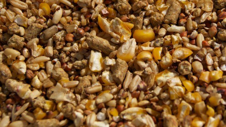 ۳ هزار و ۷۰۰ تن خوراک دام در اختیار دامداران خوشاب قرار گرفت