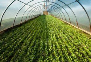 توسعه کشت گلخانهای به صورت مدرن در شهرستان مشهد