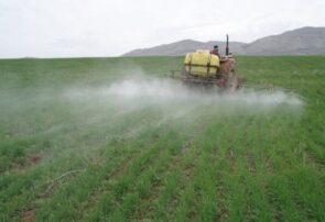 سمپاشی بیش از ۶ هزار هکتار از مزارع غلات شهرستان جوین علیه آفت سن