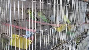 شناسایی و دستگیری متهمان پرونده باند سرقت از پرنده فروشیها در سرخس