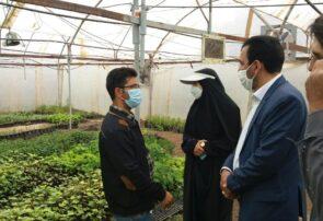 مدیر جهاد کشاورزی جوین: کشت گیاهان دارویی، فرصت طلایی برای بهره برداری اقتصادی
