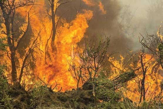 آتش سوزی مراتع کوه روستای درخت بید سرخس