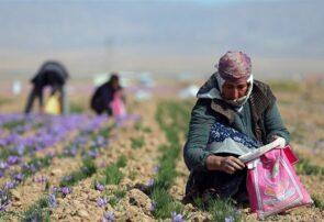 درخواست زعفران کاران رشتخواری از دولت و نمایندگان مجلس شورای اسلامی