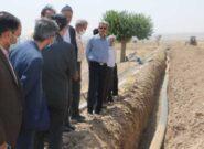 افزایش بهرهوری کشاورزی کاشمر با مصرف بهینه آب