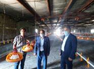 بهبود اشتغال شهرستان کاشمر با راهاندازی مجدد واحدهای تولیدی راکد