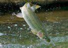 آغاز صید ماهی گرمابی از استخرهای ذخیره آب کشاورزی تایباد