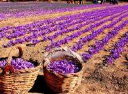 نخستین مرکز خرید حمایتی زعفران ایران در تربتحیدریه افتتاح شد