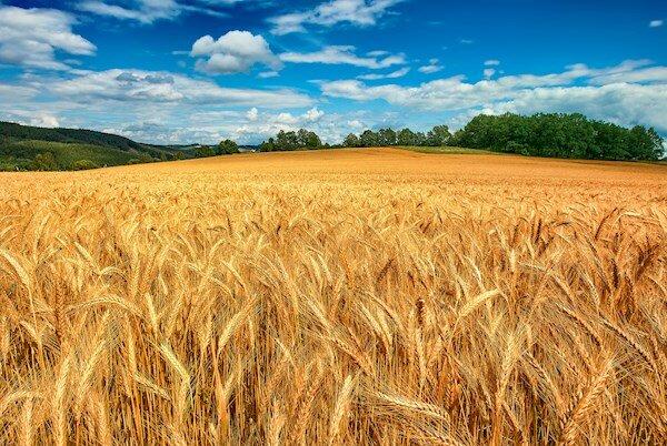 مدیر جهاد کشاورزی جوین: حمایت از سرمایه گذاران بخش کشاورزی لازمه خودکفایی در تامین نیاز داخلی کشور