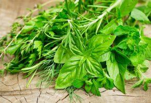 تولید سالانه ۱۳۲ تن گیاهان دارویی در شهرستان جوین